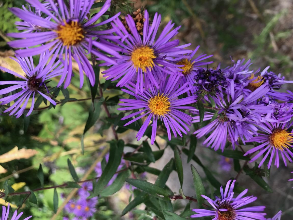 Talk & Workshop with Lorraine Johnson--  Mix and Match: Beautiful Combinations of Native Plants